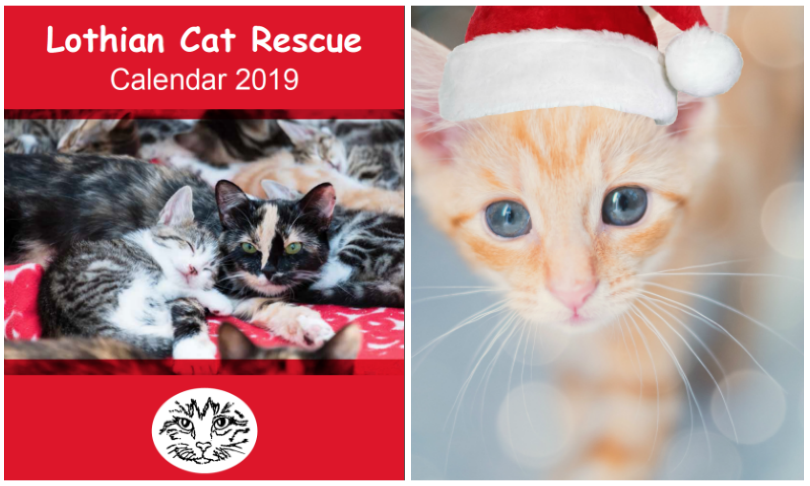 2019 Calendar and Christmas cards now on sale