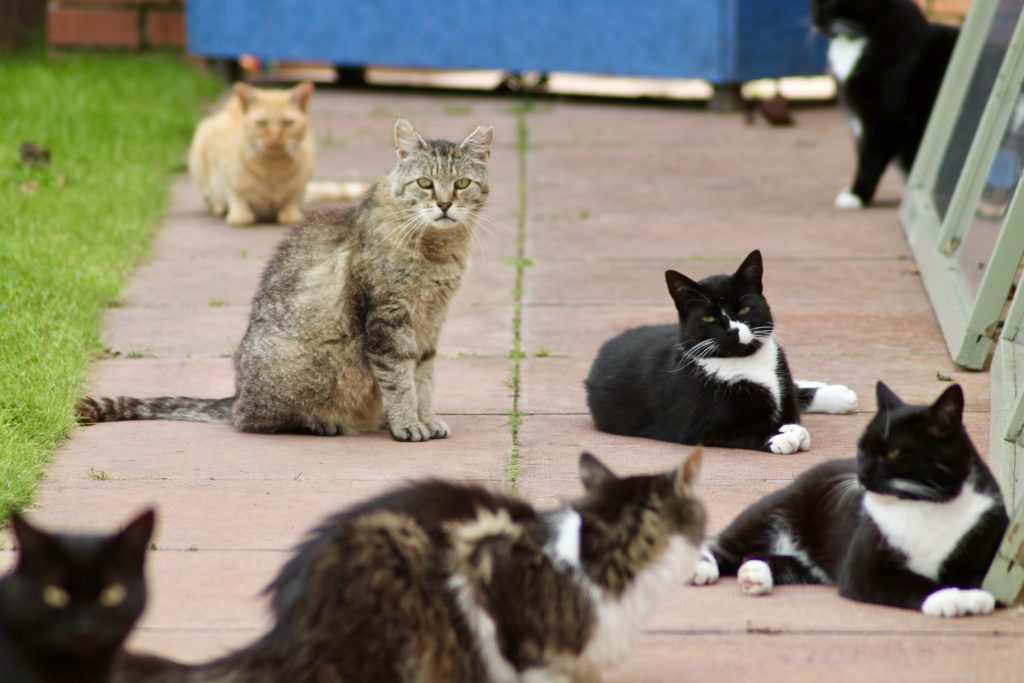 This picture shows some of the groundscats at our shelter