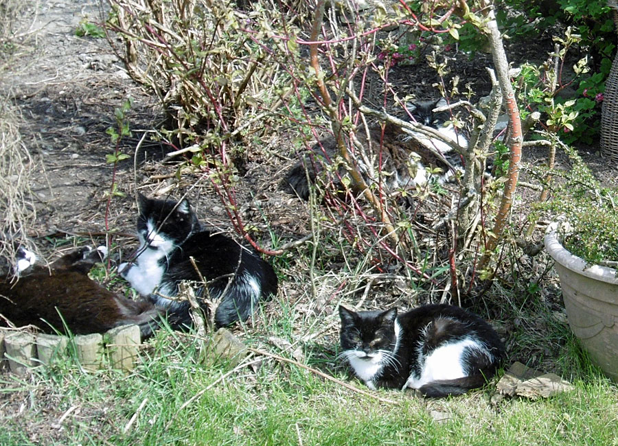 grounds cats