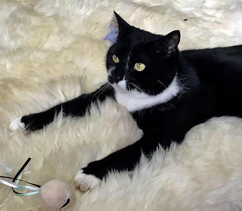 Soko the cat