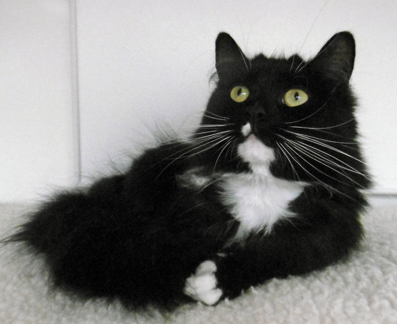 Millie the cat