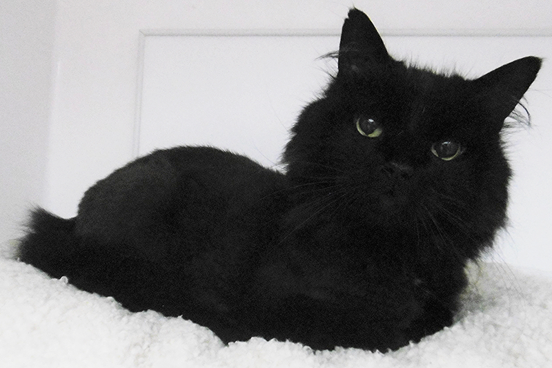 Sooty the cat
